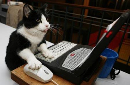 chat-ordinateur.jpg
